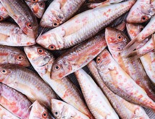 Black Sea Barbun (Surmullet Fish)